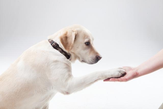 犬がお手をする様子