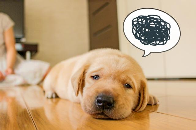 犬の下痢は病気のシグナル