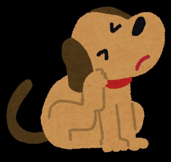 犬かゆい仕草